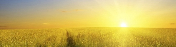 ws_Bright_Sunshine_&_Field_852x480